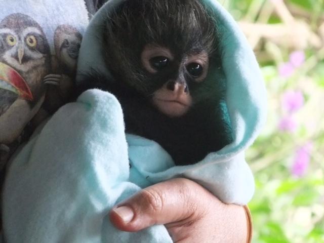 5. monkey baby.jpg
