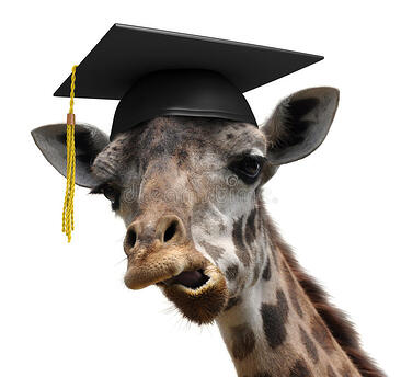 unusual-animal-portrait-goofy-giraffe-college-graduate-student-funny-picture-who-just-graduated-university-wearing-graduation-50112273